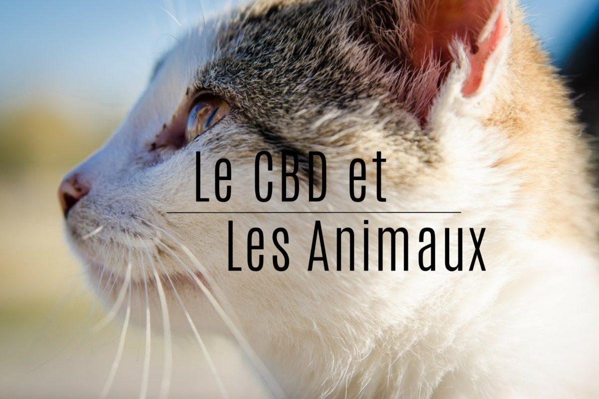 Le cbd et les animaux